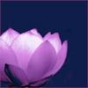 Lotus flower by BlueRavenAngel
