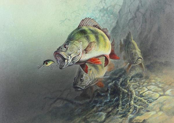 рыбный бренд у рыбаков