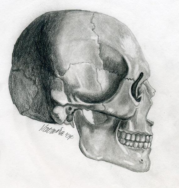 Side Profile Skull by Katgome on DeviantArt