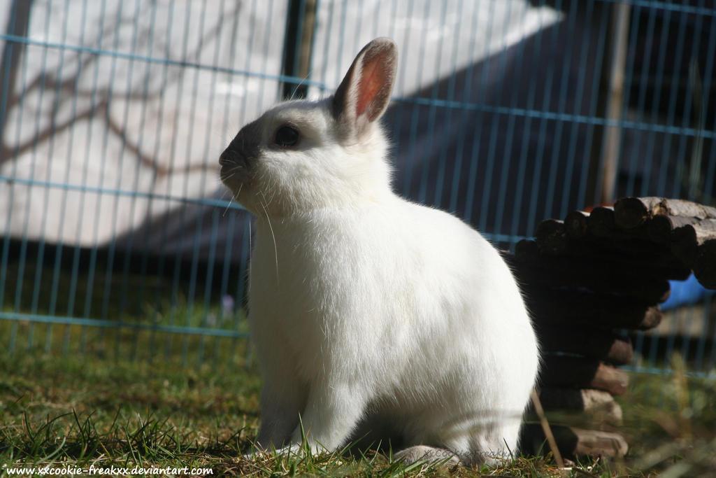 New Bunny - Tino by Ayamel