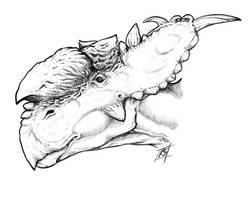 Pachyrhinosaurus lakustai by rydicanubis