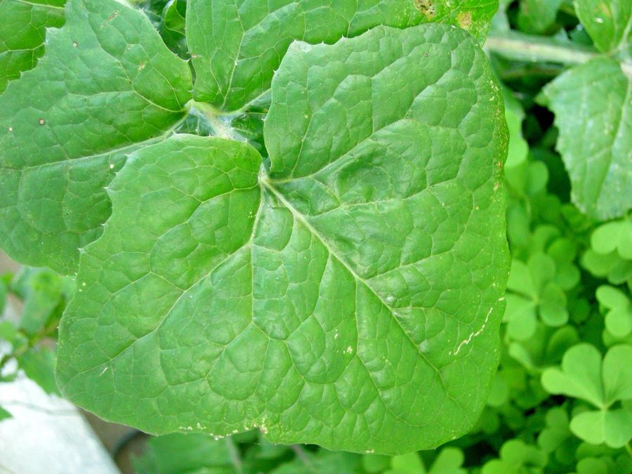 Leaf Texture by shawn529