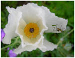White Flower with Insect
