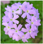 Purple Flower World