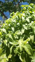 Sunny Plants