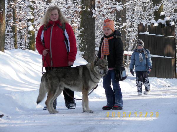 czech wolfdog  Ben 5 by Blondlupina