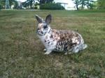 Rabbit Stock Image-12