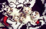 kittens II