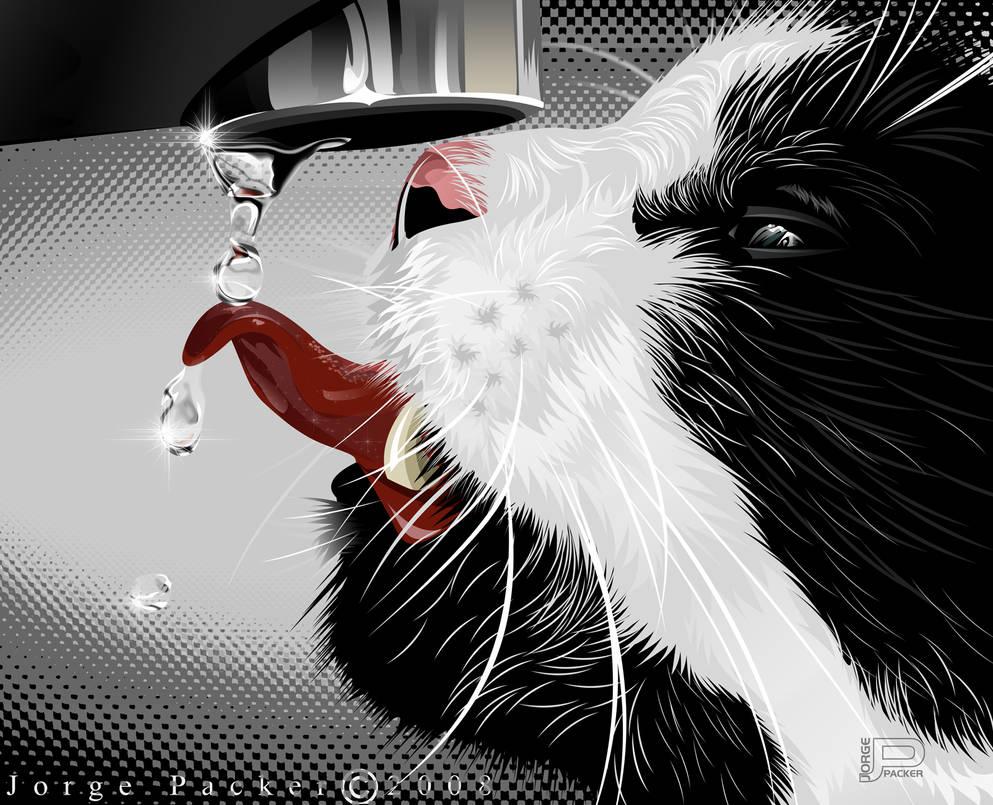 Gato by jorgepacker