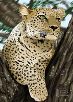 Leopardo by jorgepacker