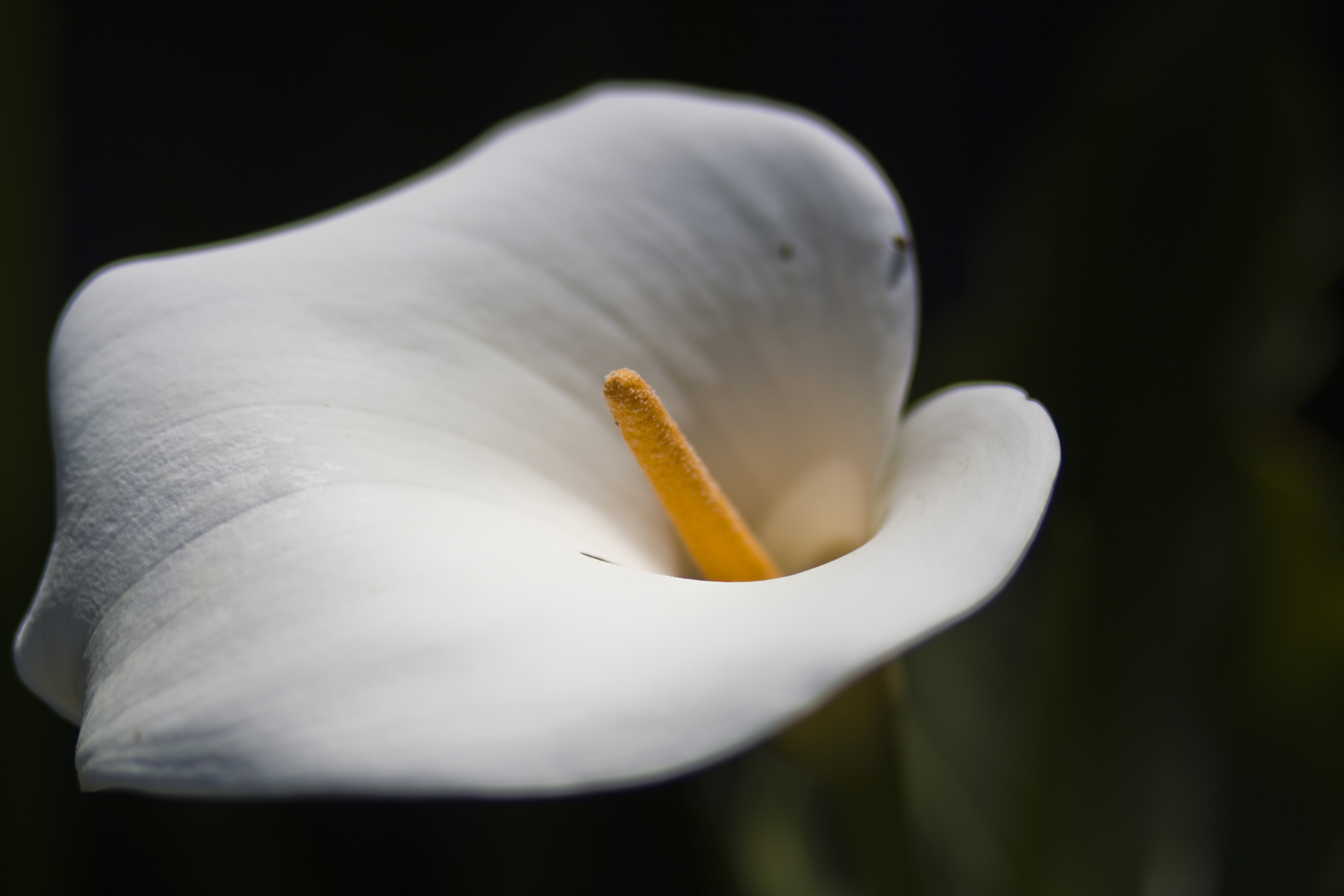 White flower closeup by thelilphotographer on deviantart white flower closeup by thelilphotographer white flower closeup by thelilphotographer mightylinksfo
