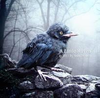 A Little Raven by DigitalDreams-Art