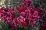 Flower Stock1 by DigitalDreams-Art