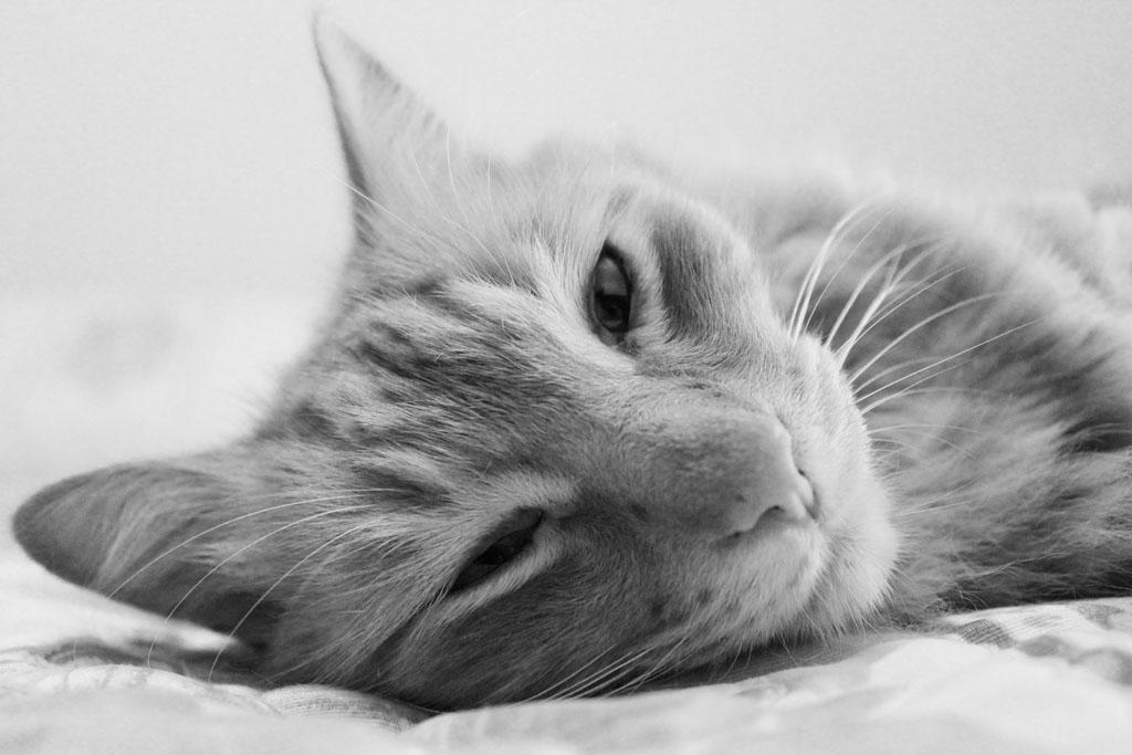 Lazy Day by GabiAngelo