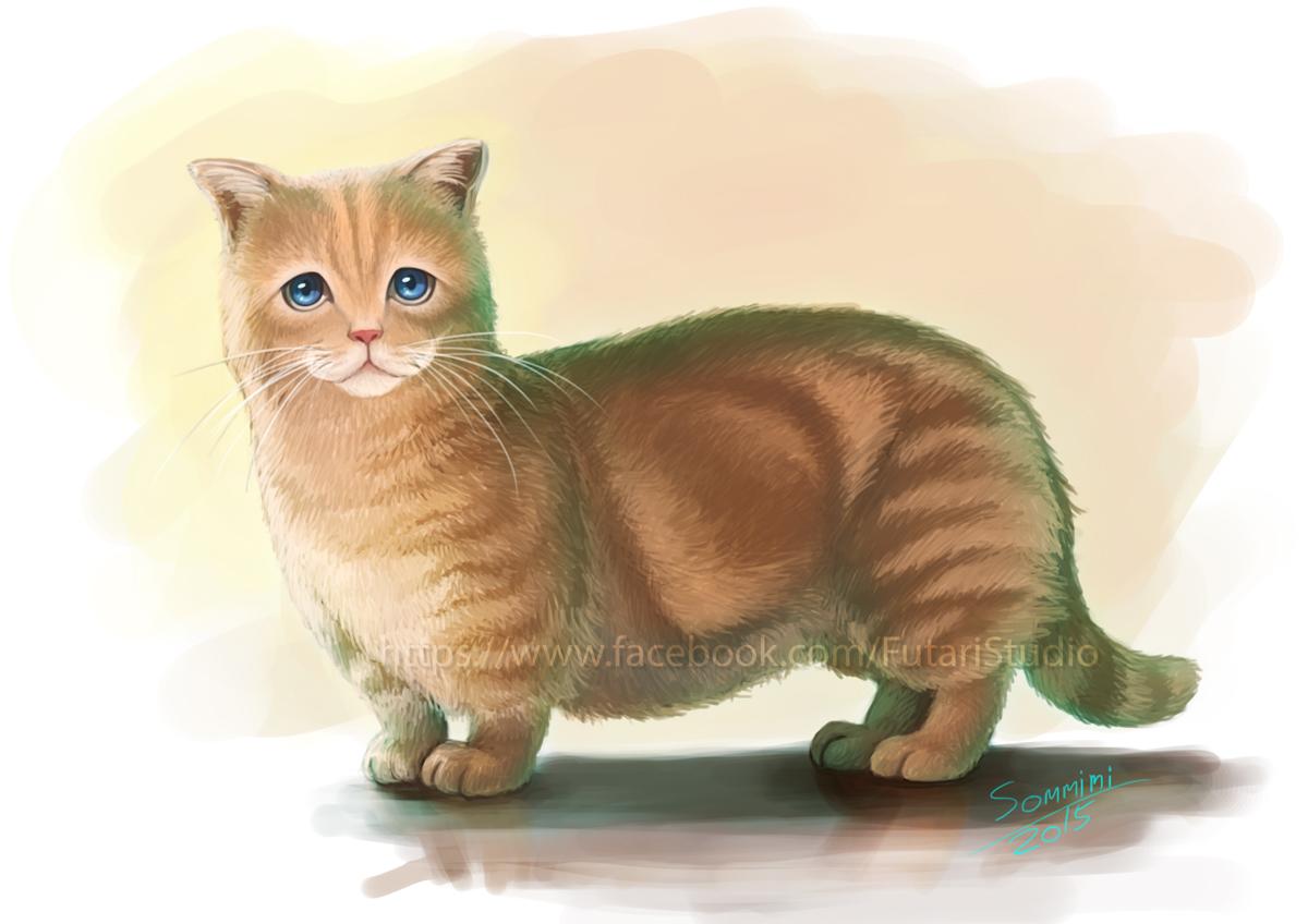 Munchkin Cat Full Grown Vs Kitten Sixe