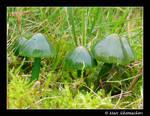 Little green toadstools