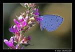 Blue beauty - II