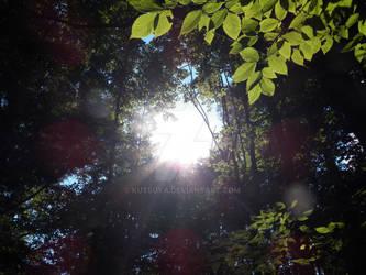 Woodsy Light by Kutsuya