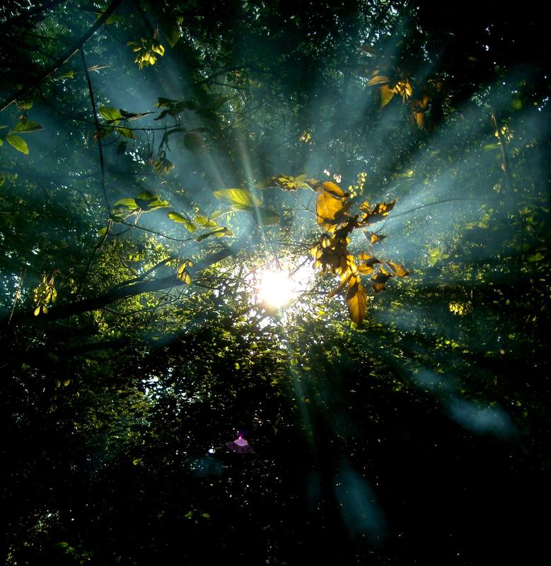 Süzülen Işık Manzaraları