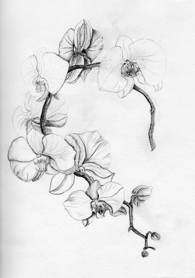 Orchidee by migas90 on deviantart - Orchideen tattoo vorlage ...