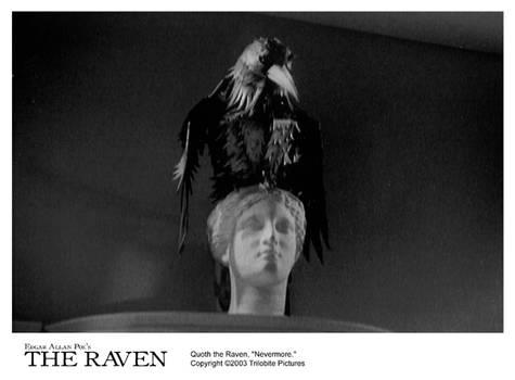 THE RAVEN 8x10-14