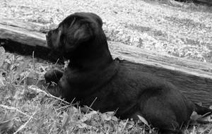 the puppy 2