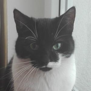 AnneMarie1986's Profile Picture