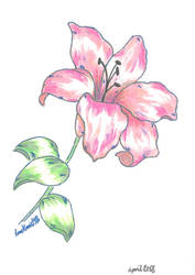 Pink Lily by AnneMarie1986