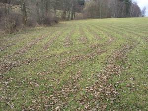 Leaf Rows