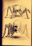 Arachno Skull