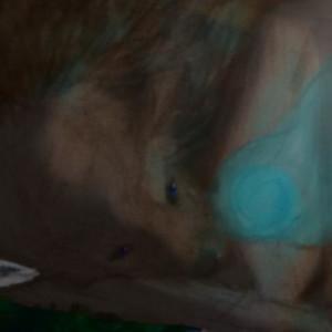blackwolfofdeath's Profile Picture