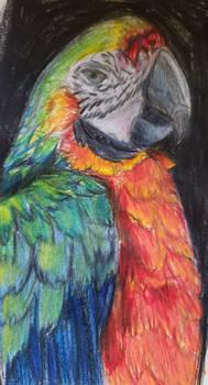 Bird part 2