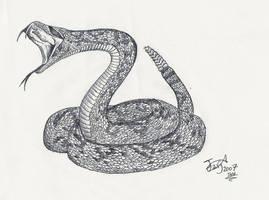 Crotalus giganteus by HodariNundu