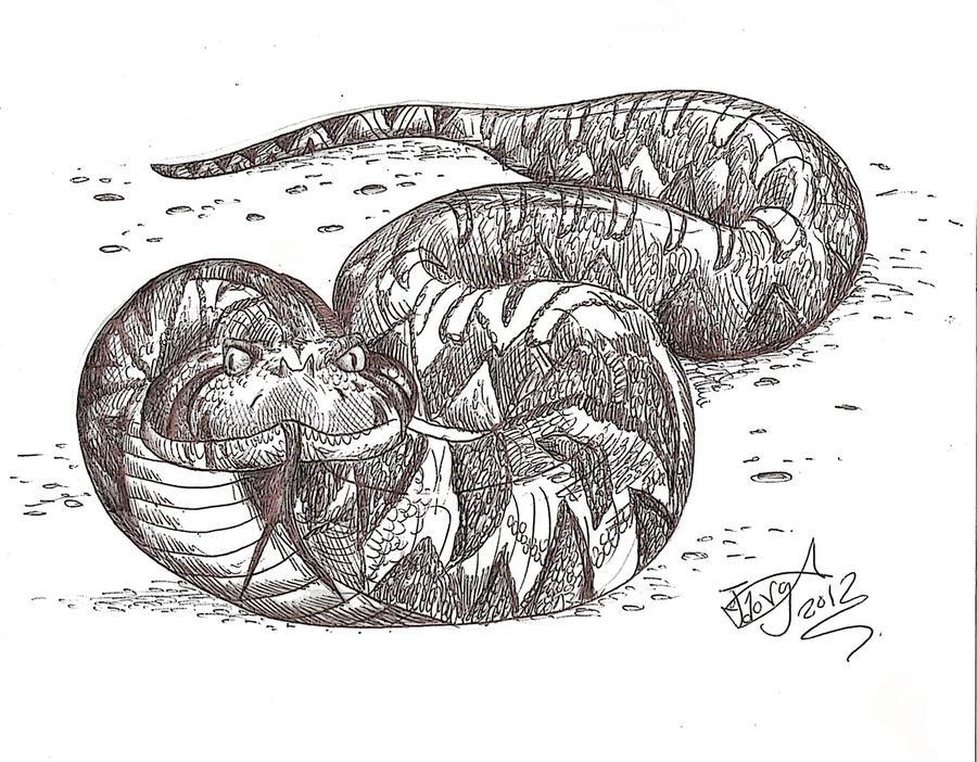 Laophis crotaloides by HodariNundu
