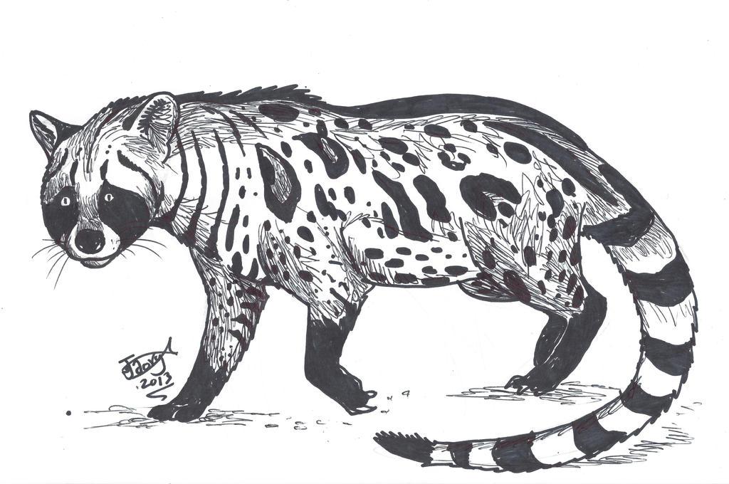 Giant Civet by HodariNundu