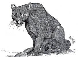 Puma pumoides by HodariNundu