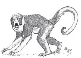 Protopithecus