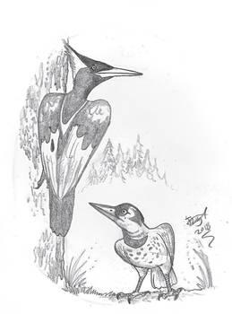 Big Woodpeckers
