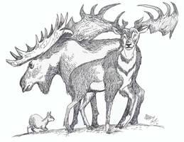 Big Deer (and a little pudu too)