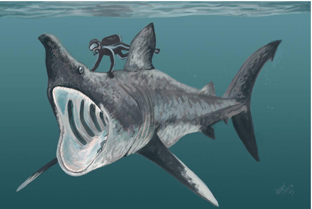 Diving with Cetorhinus huddlestoni
