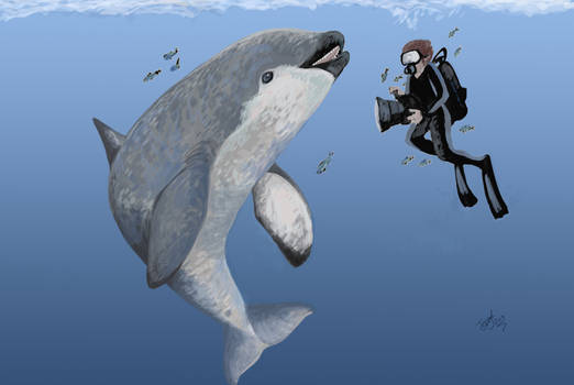 Diving with Haborophocaena by HodariNundu
