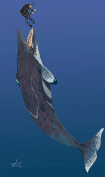 Diving with Llanocetus by HodariNundu