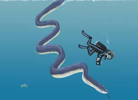 Diving with Pterosphenus