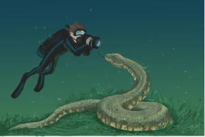 Diving with Acrochordus dehmi