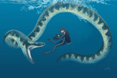 Diving with Palaeophis