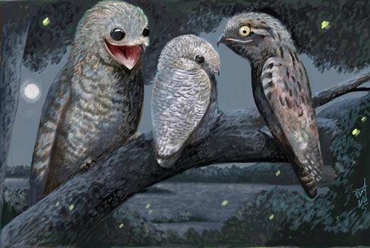 Night of the Ghost Birds