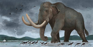 Columbian Mammoth!!