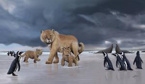 Patagonian Panther