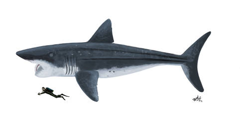 Parahelicoprion!