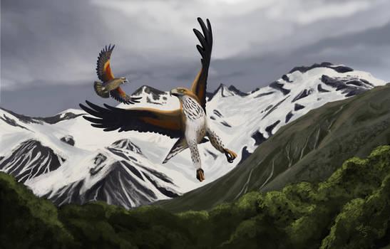 Haast's Eagle